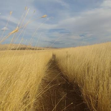 McBee Path